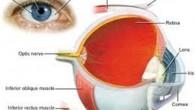 Para manter uma boa saúde ocular e proteger sua visão, selecionamos seis dicas que envolvem iniciativas saudáveis para os olhos com itens como nutrição, estilo […]