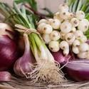 AsCebolaspertencem à família allium e são amplamente cultivados é consumido em todo o mundo. Além disso, Qualquer prato culinário seria incompleto sem as cebolas, Ele […]