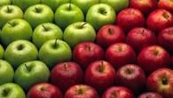 A maçã ajuda a controlar certas doenças como diabetes, melhora a digestão, contribuindo para um melhor aproveitamento dos nutrientes e é indicada para quem deseja […]