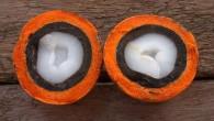 O tucumã é uma fruta da Amazônia que vem sendo utilizada para ajudar a prevenir e a tratar à diabetes, pois ela é rica em […]
